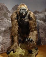 Gigantopithecus-blackii.jpg