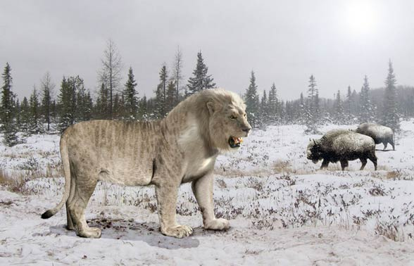 Eurasian Cave Lion
