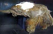 Mammoth-1