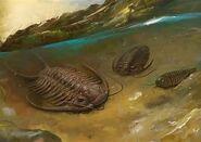 Trilobite-1