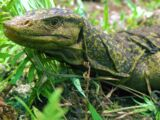Northern Sierra Madre Forest Monitor