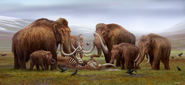 Restoration of a Woolly Mammoth herd mourning