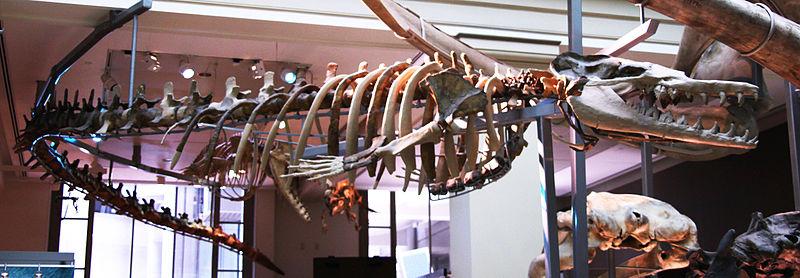 Basilosauridae