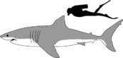 Great White Shark size