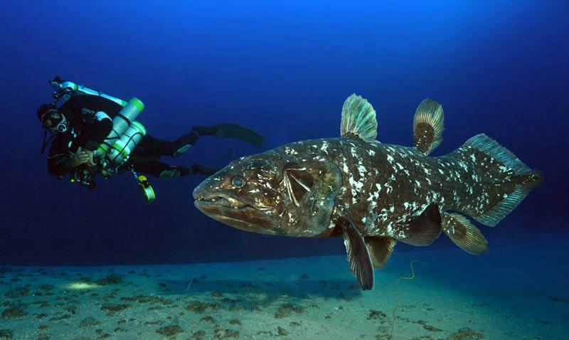 Coelacanthiformes