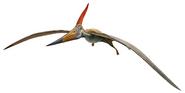 AMNH Pteranodon longiceps