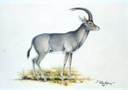 Blue Buck drawing by Ray Holing