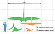 Pteranodon longiceps size comparison