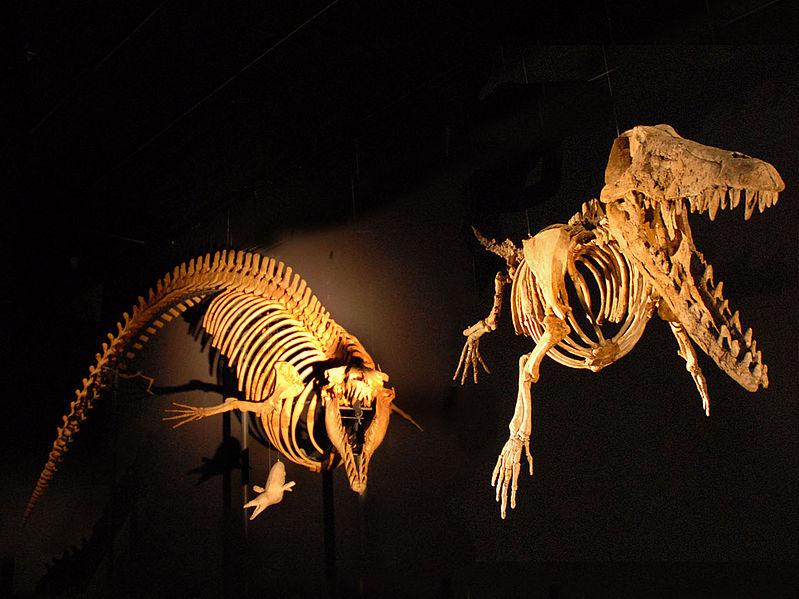 Archaeoceti