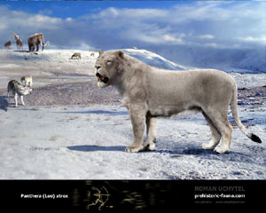 American Cave Lion (Ice Age)