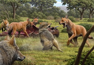 Illustration of Gray Wolves and Dire Wolves fight