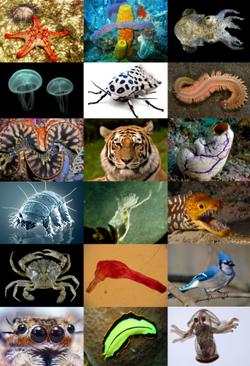 Animal diversity (1).png