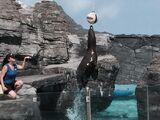 Sea Lion Coliseum