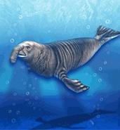Elephant Seal ZT
