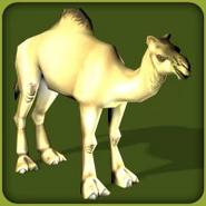 Dromedary Camel (Blue Fang)
