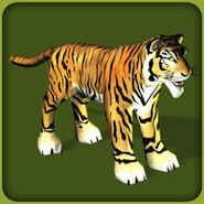 TigerBengal BlueFang