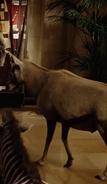 NatM Oryx