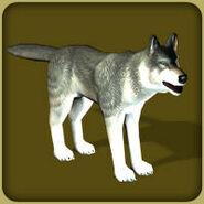 Grey Wolf (Blue Fang)