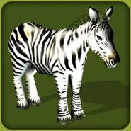 Common Zebra (Blue Fang)