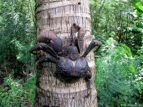 Пальмовый вор 6