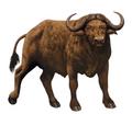 Buffalo book 39 morph
