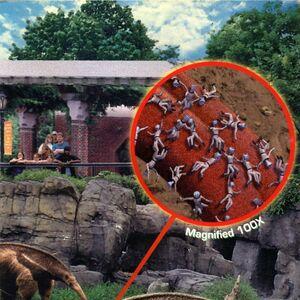 Animorphs suspicion book 24 inside cover anteater.jpg