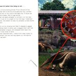 Animorphs 24 the suspicion inside cover and quote.jpg