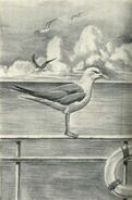 Animorphs morphed as seagulls on a ship The Message Japanese illustration