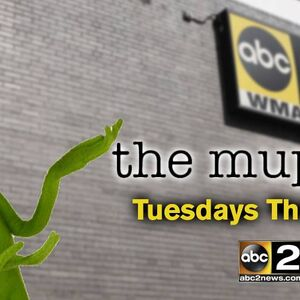 WMAR-TV's The Muppets Video Promo For Fall 2015.jpg