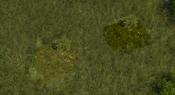 TropicalForest8Screenshot