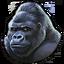 Gorilla silverback 0