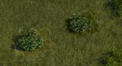 TropicalForest4Screenshot