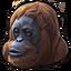 Bornean orangutan 0