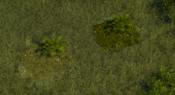 TropicalForest5Screenshot