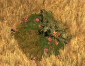 Flowerbed4Screenshot