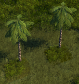PalmTree5Screenshot