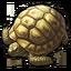 Icon turtle 0