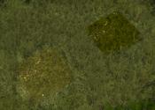 GrassNWScreenshot