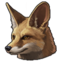 Blanfords fox 0