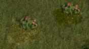 FloweringShrub7Screenshot