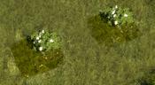 FloweringShrub5Screenshot