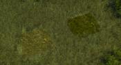 TropicalForest1Screenshot