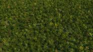PalmTreesScreenshot