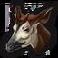 Okapi 0