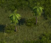 TropicalForest10Screenshot
