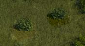 TropicalForest3Screenshot