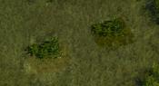 TropicalForest6Screenshot