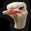 Ostrich 0