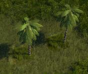 TropicalForest9Screenshot