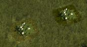 FloweringShrub1Screenshot